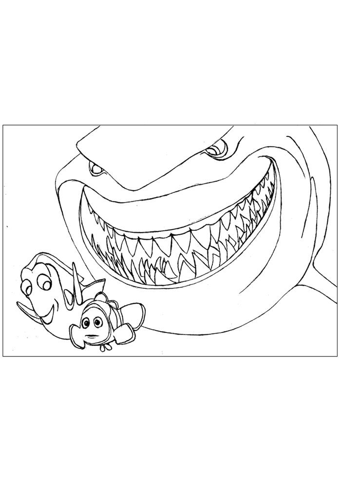 Nemo pas op voor de haai