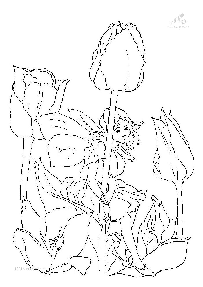 Elfjes - zitten bij een bloem