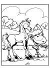 de snorkels paard